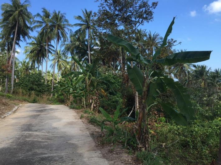 S885: SEA VIEW KOH SAMUI LAND PLOT FOR SALE