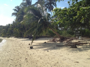 S692: BEACH FRONT LAND
