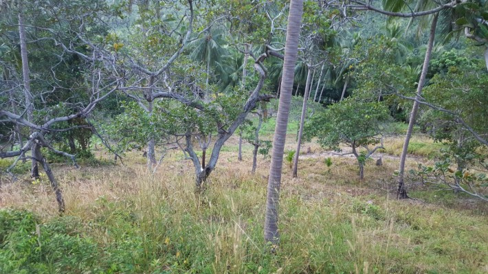 S1028: 7 RAI KOH SAMUI LAND FOR SALE IDEAL FOR PROJECT
