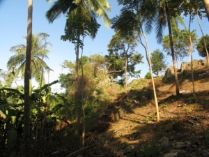 S1379: 13.61 RAI SEA VIEW KOH SAMUI LAND PLOT FOR SALE FOR PROJECT