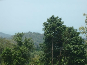 S1080: SEA VIEW KOH SAMUI LAND PLOT FOR SALE