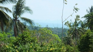 S1619: KOH SAMUI LAND PLOT FOR SALE WITH STUNNING SEA VIEWS