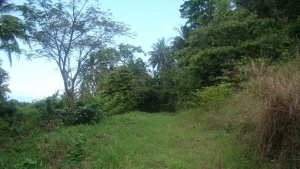 S1827: KOH SAMUI LAND PLOT FOR SALE WITH SEA VIEWS