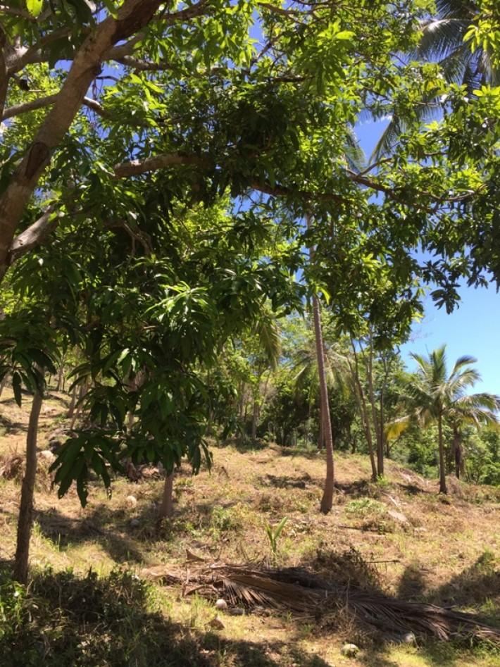 S1032: SEA VIEW KOH SAMUI LAND PLOT FOR SALE CLOSE TO THE RING ROAD